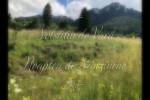 Vedeti detalii pentru Femeile Si Sanzienele: Vindecarea Arborelui Genealogic!