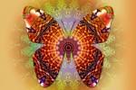 See Fluturele, simbolul Transformarii Personale. Atelier Mandale details