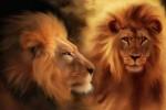 Vedeti detalii pentru Lion reiki-initiere la distanta