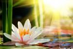 Vedeti detalii pentru Upadesamrita: Cele 11 Invataturi despre Calea spre Perfectiune.